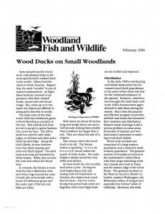 WoodDucksOnSmallWoodlandsWFCAImage