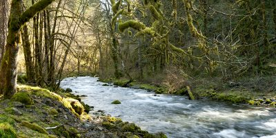 Taner Creek in the Columbia Gorge, Oregon