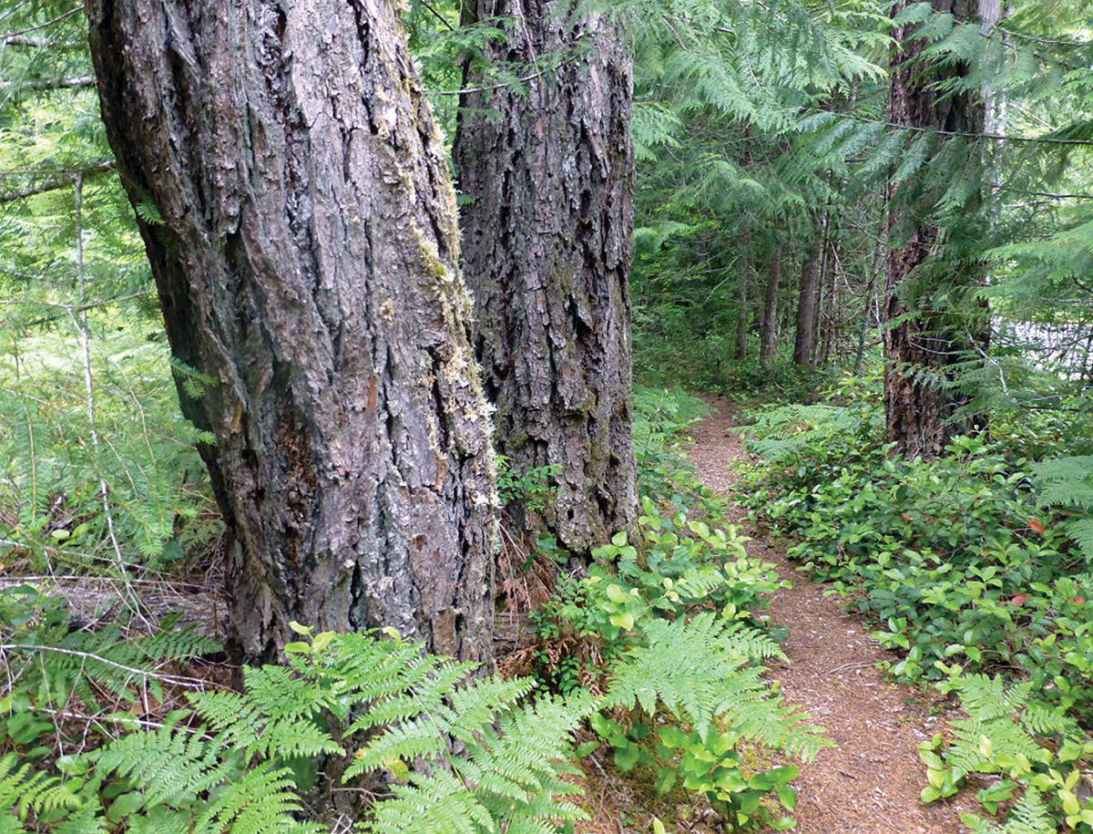 Westside Douglas-Fir Forests and Wildlife - Woodland Fish ...  Douglas Fir Forest