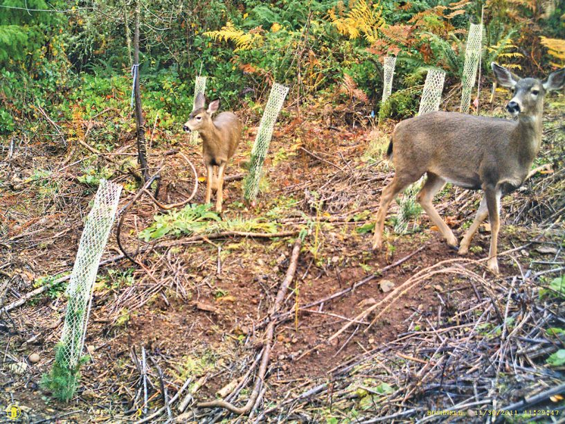 Monitoring Two Deer